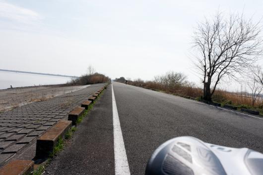 渡良瀬遊水地サイクリングコース