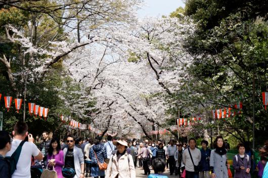 上野公園桜街道