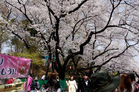 上野公園桜2014-04