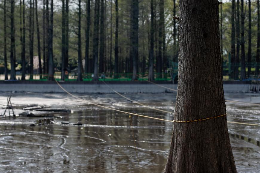 [動画] 別所沼公園の「かいぼり」続報 @さいたま市 浦和