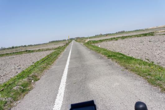 荒川サイクリングロード田んぼ