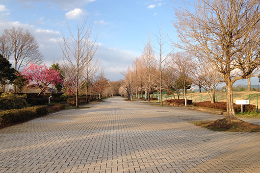 Chichibu muse park 09
