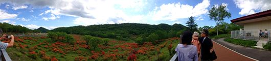 赤城山ヤマツツジパノラマ